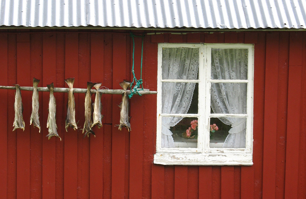Dried cod on the Lofoten Islands – for the world and for Norwegian homes.